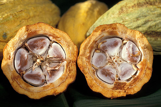 Cocoa beans in a cocoa pod. Photo credit: Keith Weller, USDA ARS